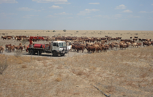 Aussie cattle station.jpg